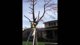 Man Pruning A Tree Knocked Down By Falling Branch - Video
