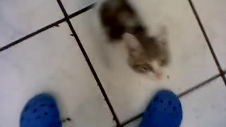 crying cat waiting for his mom