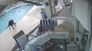 Hero Dog Jumps Into Pool, Saves Dog From Drowning... - Video