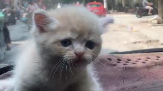 The kitten must leave his mother  - Video