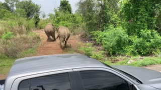 Traffic Stopped by Elephant Standoff