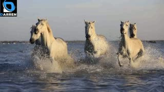 4 Pictures of Horse