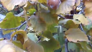 Autumn in nature - Video