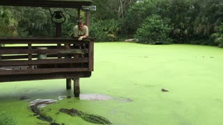 Alligator Gets Cranky at Feeding Time