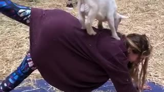 Goat Yoga Will Melt Your Heart!