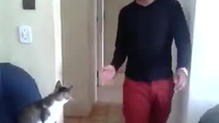 Red shorts gives handshake to white cat - Video