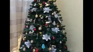 Someone decided to be part of the Christmas tree  - Video