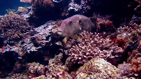Scary Fish Hiding In Corals