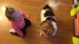 Identical twins chase Chihuahua for kisses - Video