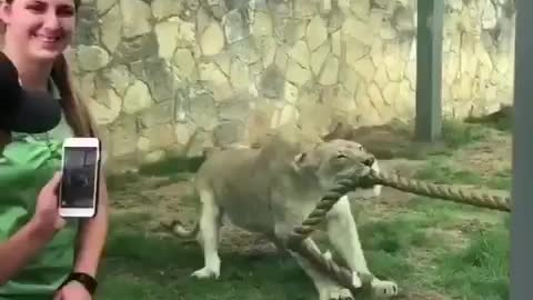 Daily reminder that human are not predator
