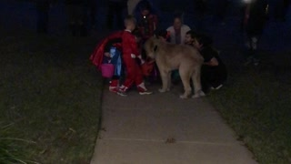 Dog Delivers Halloween Treats