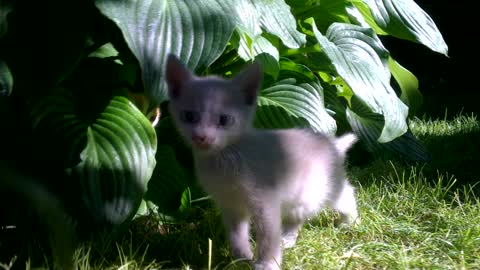 Very Cute Little Kittens Playing Around In The Backyard