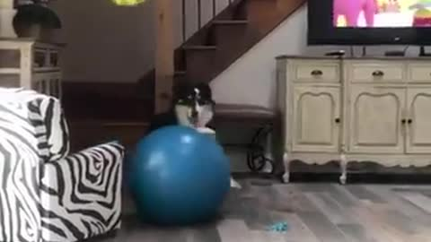 This dog can play volleyball all by himself