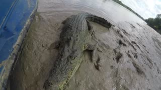 Crocodile vs GoPro - Video