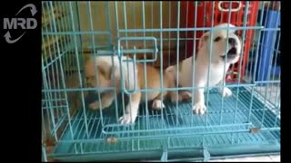 Dogs, the loveliest animals in animal world - Funny dogs compilation - Video