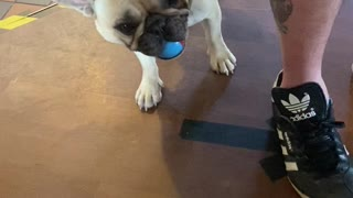 Dog Throws Ball Directly at Camera