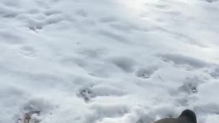 Small white dog in snow jumps at camera - Video