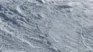 Yellow jacket skier tries double backflip and faceplants on snow
