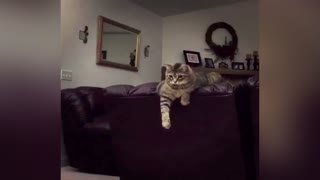 Cat Is Done Hitting Balloon - Video