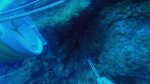 Sneaky Grouper hunts with diver, steals fish