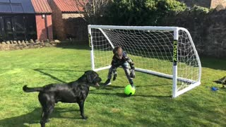 This soccer-loving dog is an extremely prolific striker