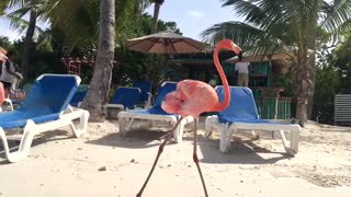 Sunny Flamingo Beach - Video