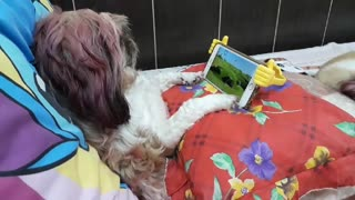 Dog Watches Favorite Show in Style - Video