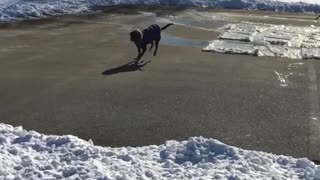 Collab copyright protection - black dog sliding on ice - Video