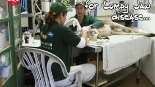 Kangaroo Goes To The Dentist - Video