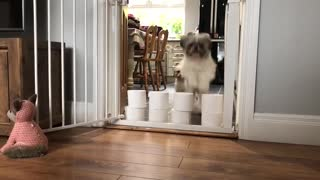 Pups Take a Leap over TP
