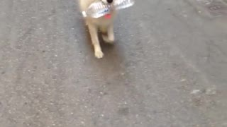 Dog walking by with bottle of water
