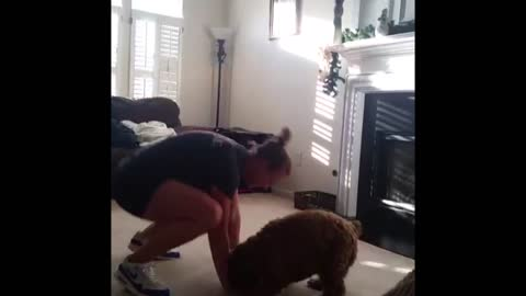 Excited Dog Mimics Her Owner's Exercises