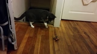 Scaredy Cat Flies Higher Than A Tiny Drone - Video