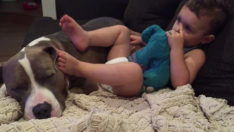 Baby relaxes by resting feet on top of Pit Bull