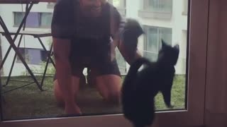"Funny cat ""helps"" owner clean the window"