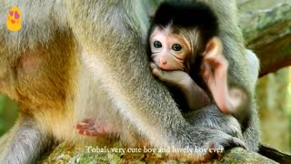 Small baby monkey so adorable want walking with mother