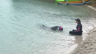Dolphins Play Catch with Beach Ball