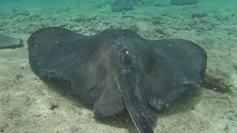 Guy Shows Us What It's Like To Go Snorkeling With Stingrays And Nurse Sharks