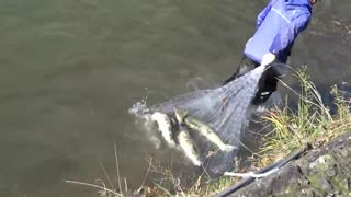The runup of the salmon is fast working in the capture and net