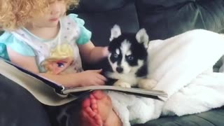 Toddler teaches her puppy how to read