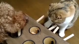 Cat playing!