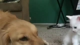 Kitten Trying to play with Dog