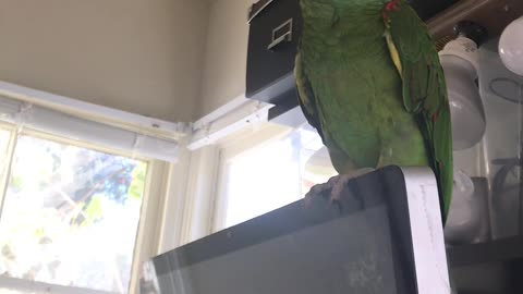 Cute bird asking for Ice cream and crash the camera