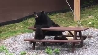 These Bears Need a Better Server