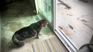 Cat tries to catch chipmunks, runs right into screen door