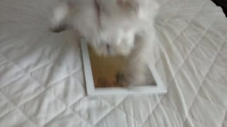 Energetic dog attempts to beat iPad game