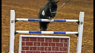 Jumping Miniature Horse