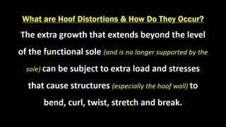 Common Hoof Distortions And How To Prevent Them - Video