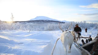Reindeer Drawn Sleigh - Video