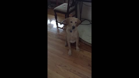 Dog Trying to Catch a Treat to Epic Music Will Make You Laugh